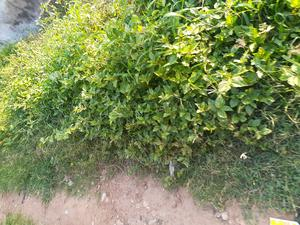 A Residential Plot of Land With Blue Survey   Land & Plots For Sale for sale in Oyo State, Ibadan