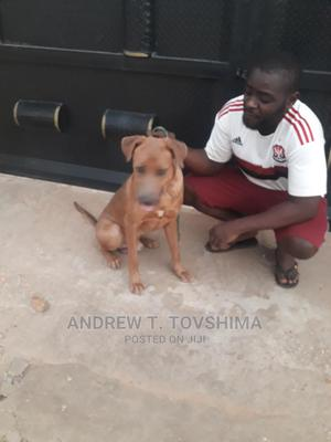 Dogs and Puppy Trainer   Pet Services for sale in Abuja (FCT) State, Gwagwalada