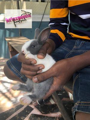 Dutch Rabbits | Livestock & Poultry for sale in Akwa Ibom State, Uyo