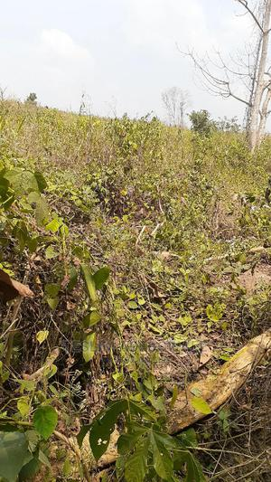 50 Acres of Land Suitable for Farming and Industrial Use   Land & Plots For Sale for sale in Ogun State, Obafemi-Owode