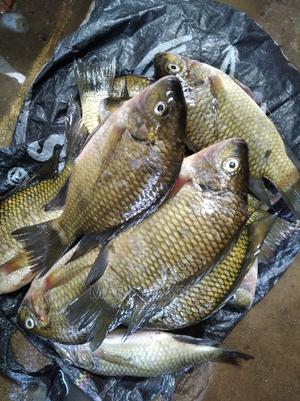 Fresh Fish Available @ Affordable Price   Meals & Drinks for sale in Lagos State, Epe