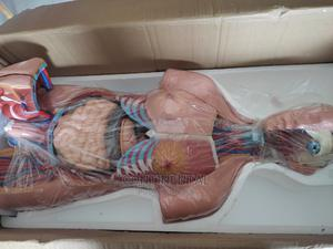 Human Unisex Torso | Medical Supplies & Equipment for sale in Rivers State, Port-Harcourt