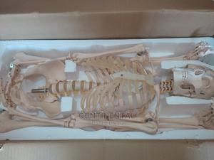 Human Skeleton, Human Full Size , Bone Resemblance | Medical Supplies & Equipment for sale in Rivers State, Port-Harcourt