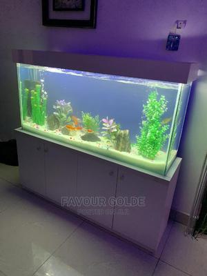 Fishs Aquarium | Fish for sale in Lagos State, Surulere