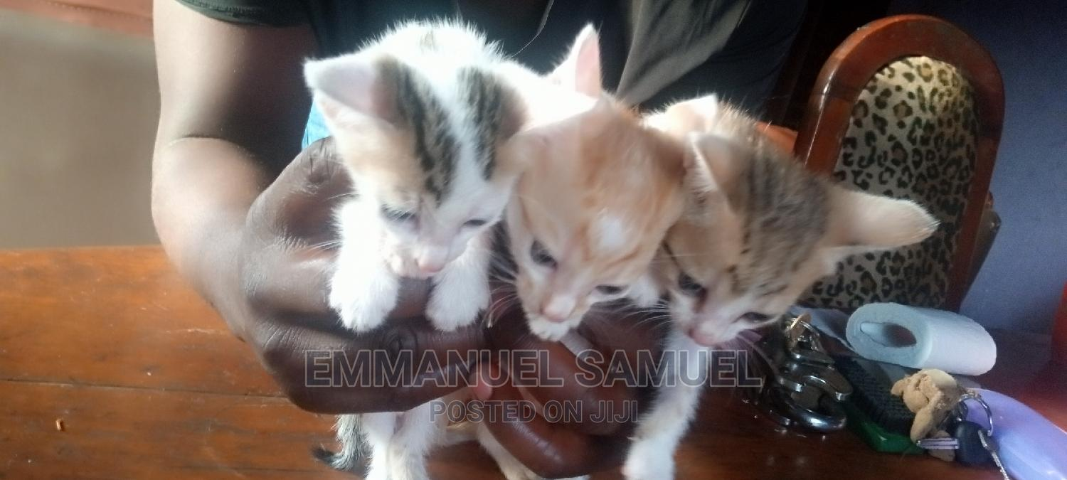 Archive: 1-3 Month Female Mixed Breed Other