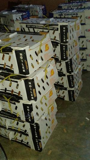 Dayold for Sale   Livestock & Poultry for sale in Oyo State, Ibadan