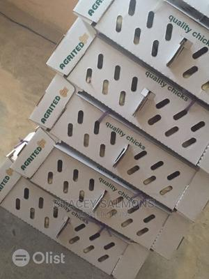 Day Old Broilers for Sale   Livestock & Poultry for sale in Ogun State, Ijebu Ode