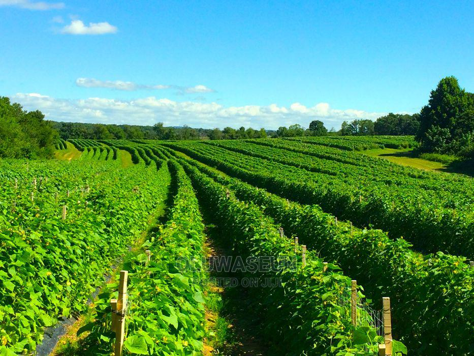 Archive: Vegetable Farm Supervisor wanted