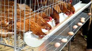 Poultry Farm Worker Needed For Immediate Employment | Farming & Veterinary Jobs for sale in Oyo State, Ido