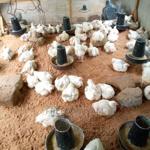 Matured Broilers | Livestock & Poultry for sale in Akwa Ibom State, Uyo