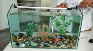 Nature Aquarium For You | Fish for sale in Lagos State, Surulere