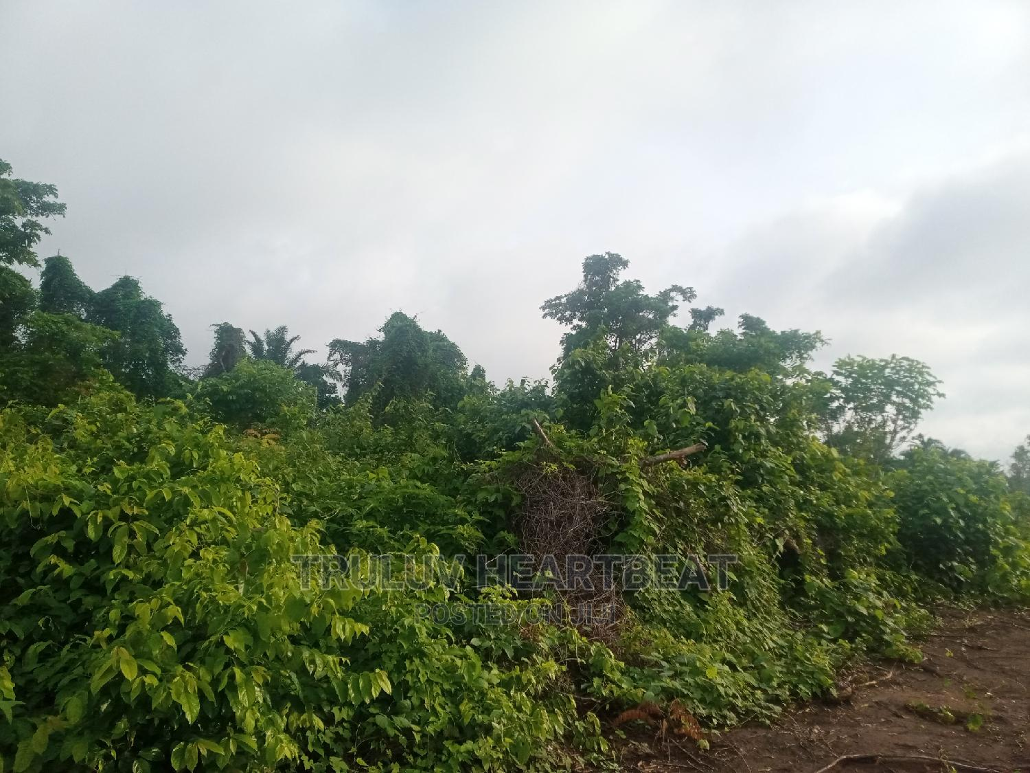 Plots of Land for Sale | Land & Plots For Sale for sale in Ilesa, Osun State, Nigeria