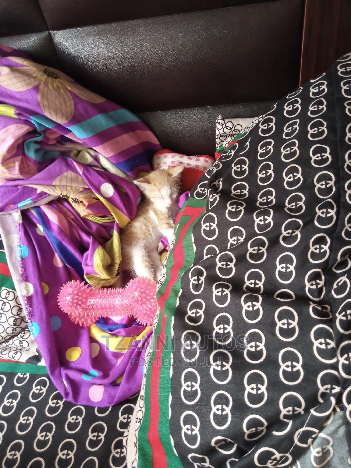 Archive: 1-3 month Female Purebred Mongrel (No Breed)