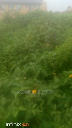 A Plot of Land for Sale. | Land & Plots For Sale for sale in Osun State, Ife