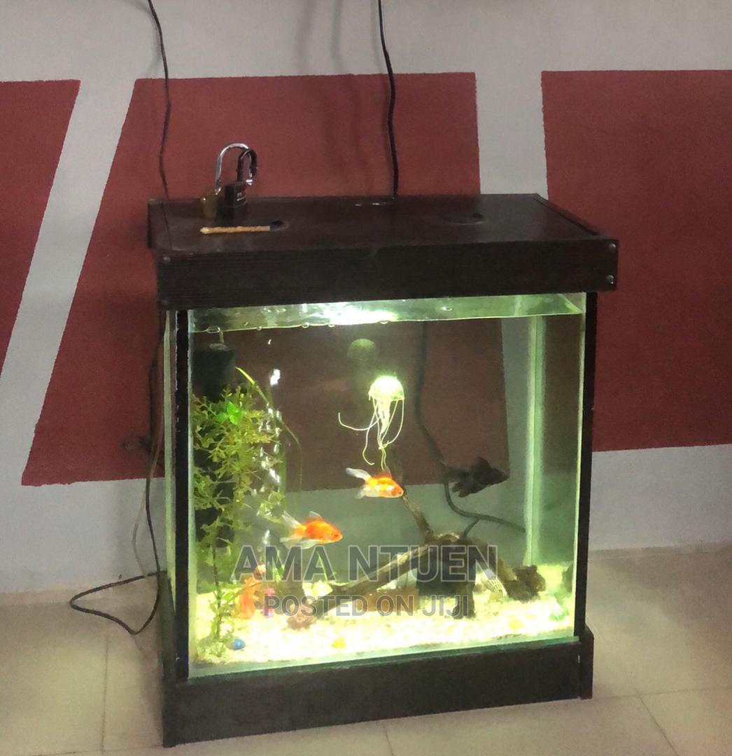 Exotic Wall Front Aquariums