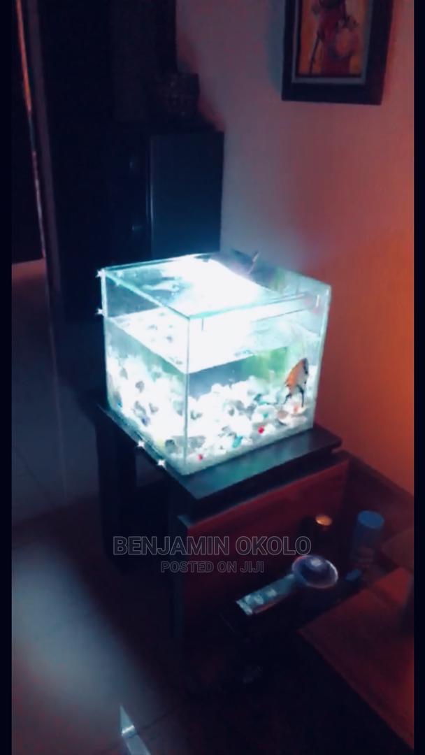 Archive: Aquarium Fish