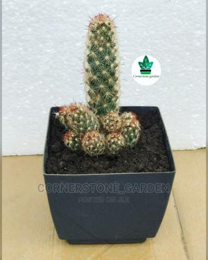 Cactus Plant | Garden for sale in Abuja (FCT) State, Maitama