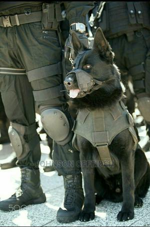 Security Guard Dog Services | Pet Services for sale in Rivers State, Port-Harcourt