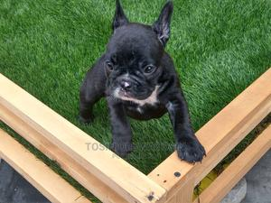 1-3 Month Female Purebred Bulldog | Dogs & Puppies for sale in Lagos State, Yaba