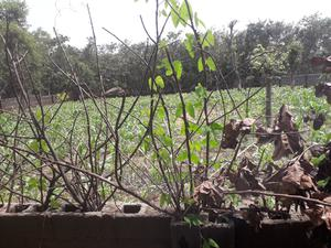 Land at Life Camp Abuja for Sale(C of O) | Land & Plots For Sale for sale in Abuja (FCT) State, Gwarinpa