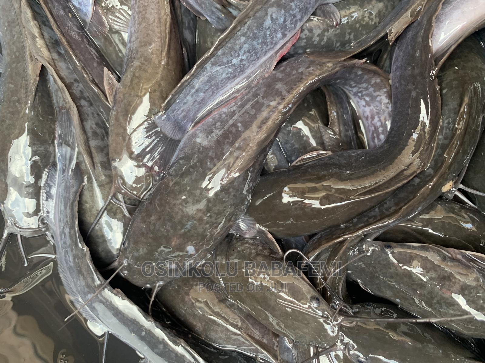 Hybrid Fingerlings/Juveniles | Fish for sale in Ado Ekiti, Ekiti State, Nigeria