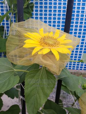 American Sunflower Seedling/Rose Flower/Marigold | Feeds, Supplements & Seeds for sale in Lagos State, Ajah