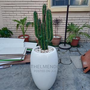 Artificial Potted Cactus Plant for Sale | Garden for sale in Lagos State, Ikeja