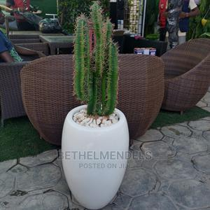 Artificial Cactus Fiber Potted Plant for Sale | Garden for sale in Lagos State, Ikeja