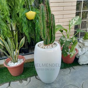 Fiber Artificial Cactus Plant for Sale | Garden for sale in Lagos State, Ikeja