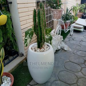 Amazing Cactus Potted Fiber Plant for Sale   Garden for sale in Lagos State, Ikeja