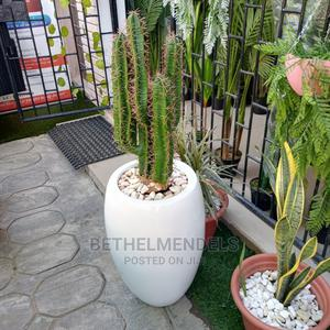 Buy Affordable Fiber Artificial Cactus Plant | Garden for sale in Lagos State, Ikeja