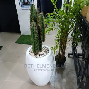 Available White Potted Cactus Plant for Sale   Garden for sale in Lagos State, Ikeja