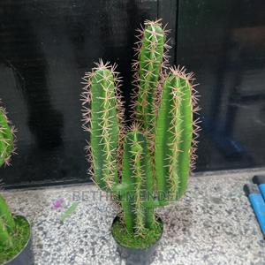 Available Potted Cactus Plant for Sale at Affordable Rate   Garden for sale in Lagos State, Ikeja