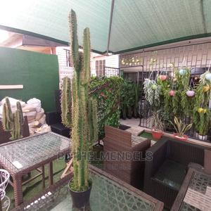 Potted Cactus Plants for Sale   Garden for sale in Lagos State, Ikeja