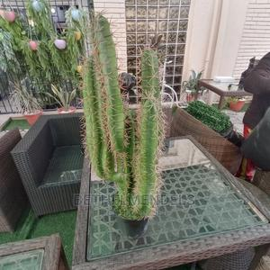 Potted Cactus Plant at Affordable Plant   Garden for sale in Lagos State, Ikeja