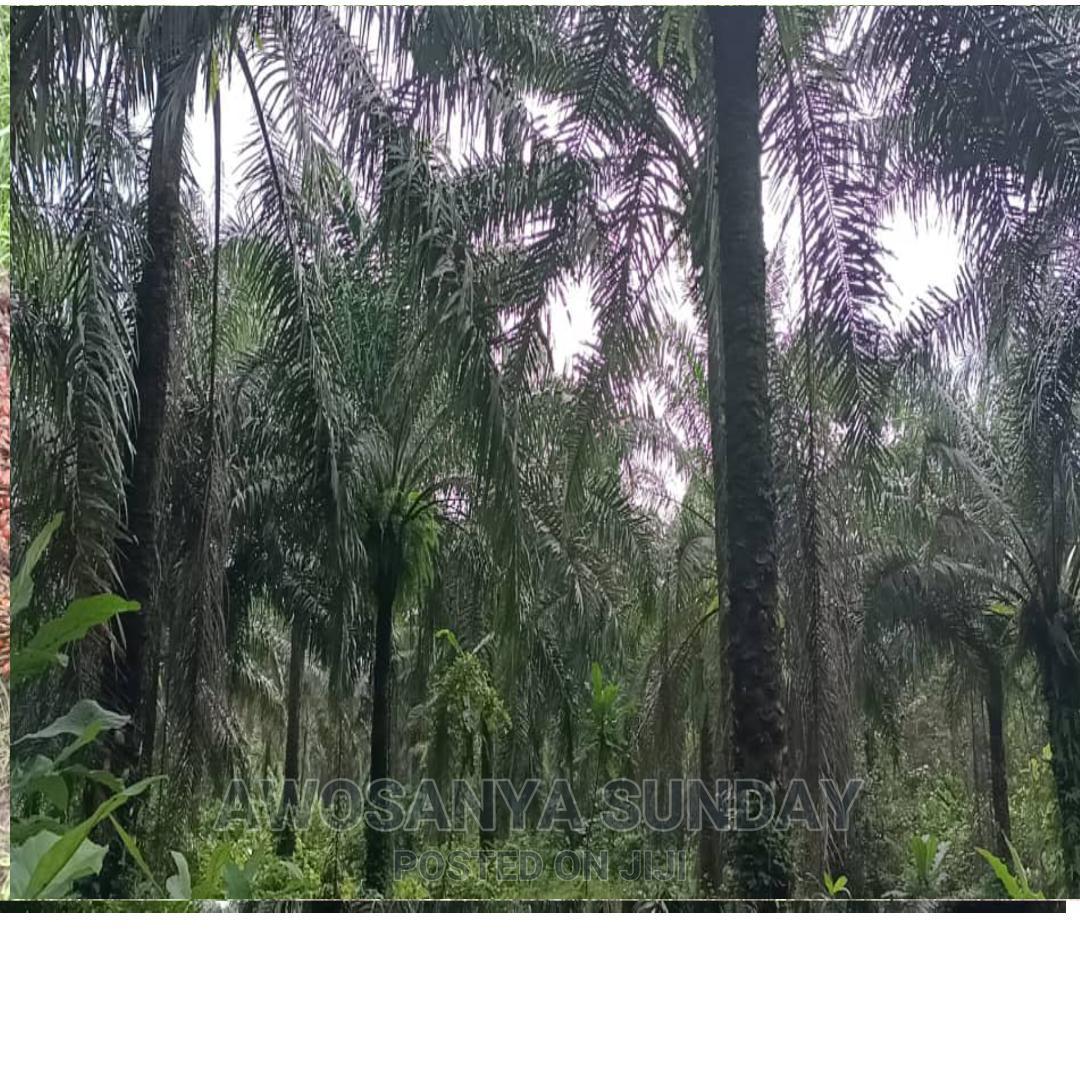 Archive: Palm Plantation
