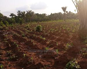 Plots of Land for Sale at Omi-Adio   Land & Plots For Sale for sale in Oyo State, Ibadan