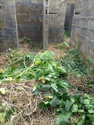 Half Plot of Land   Land & Plots For Sale for sale in Lagos State, Ikorodu