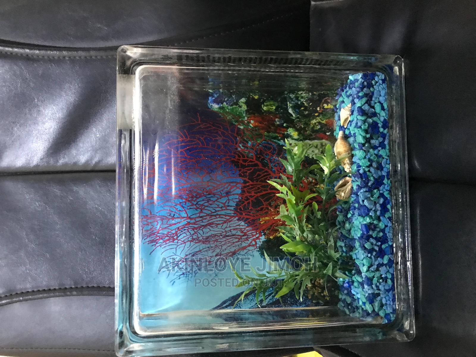 Archive: Mini Table Top Aquarium ( 9 X 9.5 X 3 Inches ) Imported