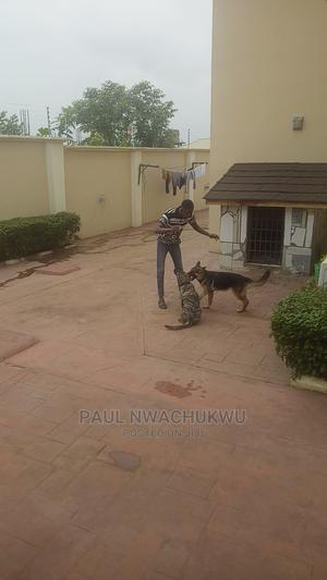 Dog Training Service | Pet Services for sale in Ondo State, Akure