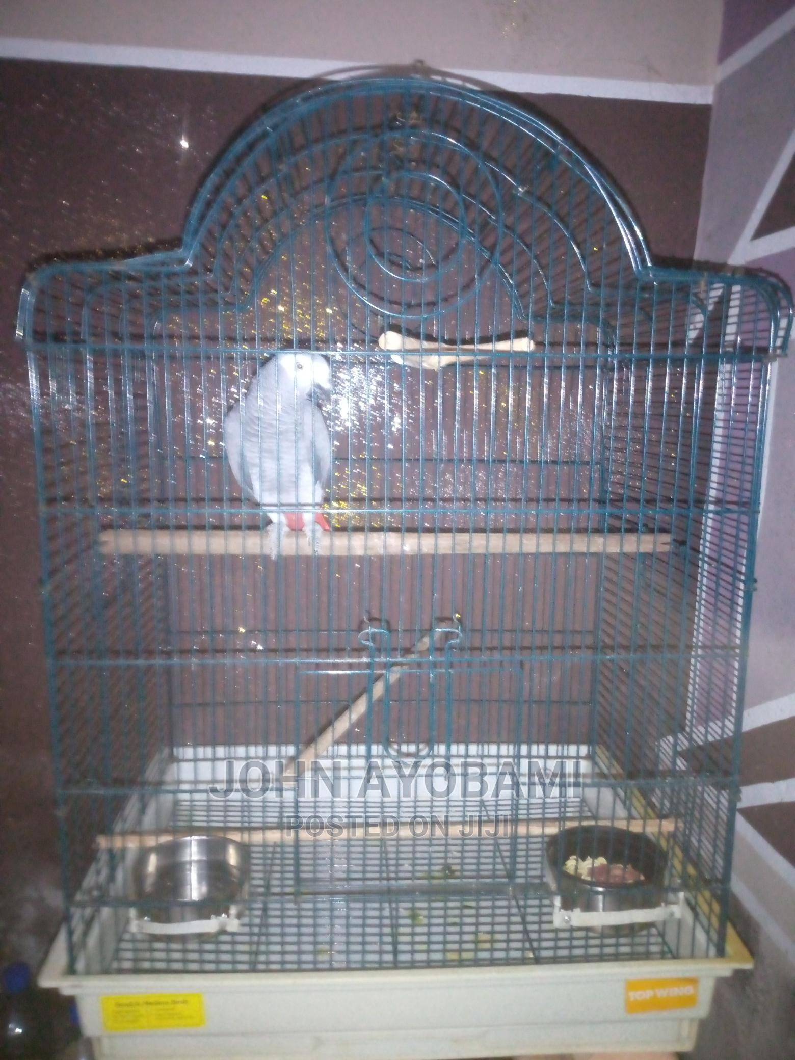 Archive: Grey Parrot With Cage