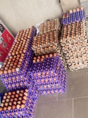 Fresh Eggs   Livestock & Poultry for sale in Kano State, Kumbotso