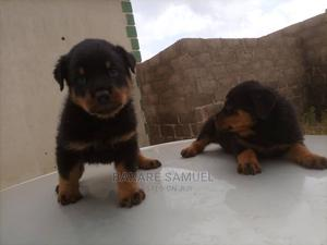1-3 Month Male Purebred Rottweiler | Dogs & Puppies for sale in Oyo State, Ibadan