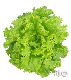 Lettuce Hybrid Seed   Feeds, Supplements & Seeds for sale in Abuja (FCT) State, Kubwa