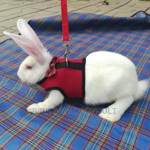 Rabbit Small Animals Harness Leash Pet Strap | Pet's Accessories for sale in Lagos State, Abule Egba