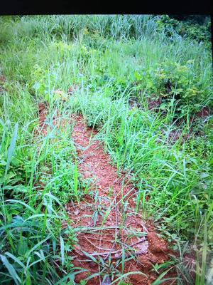 Deed/Power of Attorney | Land & Plots For Sale for sale in Enugu State, Enugu