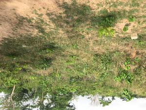 2 Plots of Land at Olounda Akobo   Land & Plots For Sale for sale in Oyo State, Lagelu