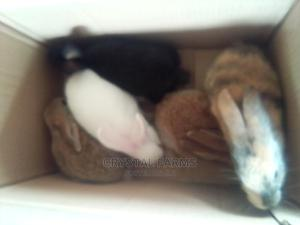 Rabbits Weaners/Young Rabbits for Sale. | Livestock & Poultry for sale in Ogun State, Abeokuta South