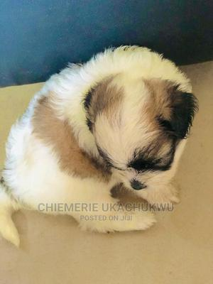 Dr Emerson Vet Doctor   Pet Services for sale in Lagos State, Kosofe