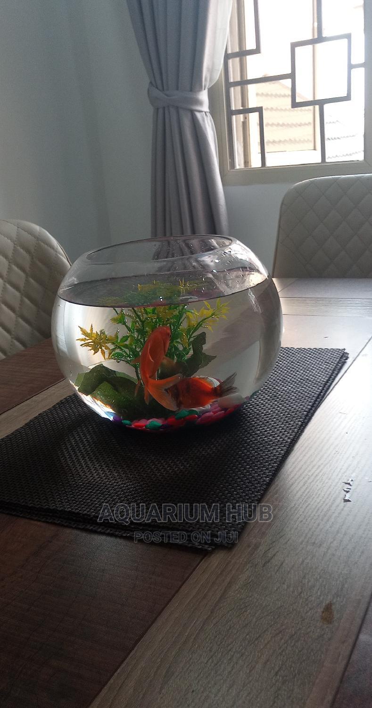 Fish Bowl Aquarium